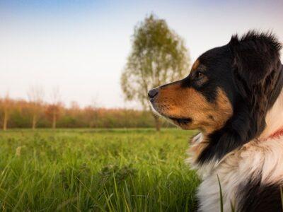dog-2208473_640