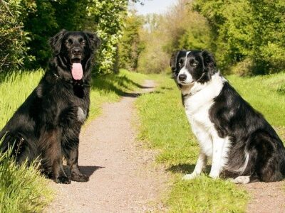 dogs-2286770_640